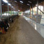 Melkzentrum Futtertisch Sarlhusen (16)